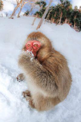 animal, monkey, natural, nature
