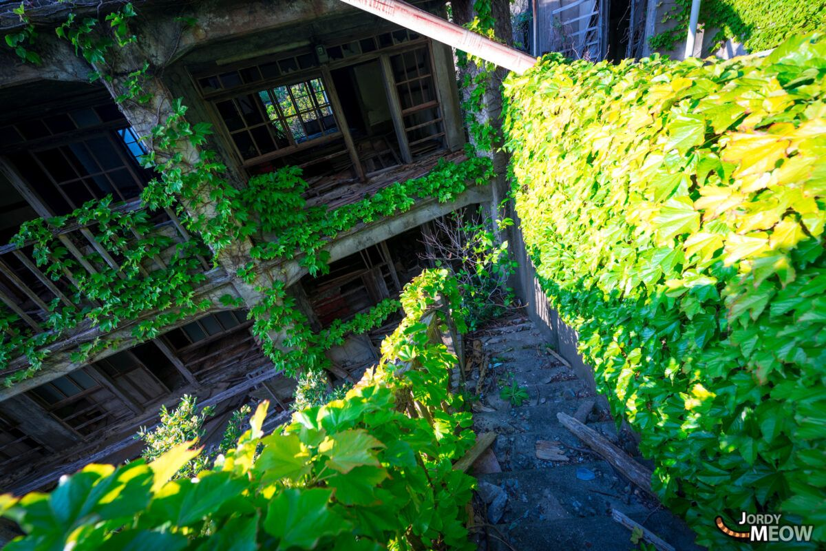 Abandoned and Covered with Vines