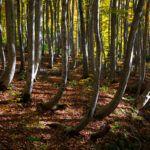 Bijin Bayashi : La Forêt des Jolies Filles